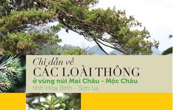 Chỉ Dẫn Về Các Loài Thông ở Vùng Núi Mai Châu – Mộc Châu, Tỉnh Hòa Bình Và Sơn La
