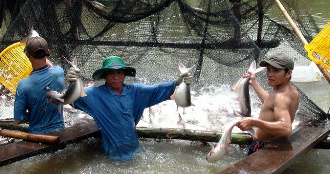 Đập Thủy điện Thượng Nguồn Sông Mê Kông: Những Quả Bom Nước
