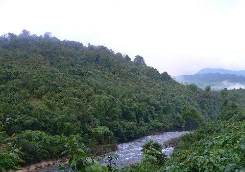 Phục Hồi Rừng Tự Nhiên Góp Phần Giảm Thiểu Thiệt Hại Thiên Tai