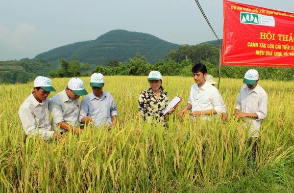 Các đại biểu thăm và kiểm tra mô hình canh tác lúa cải tiến SRI bản Huổi Hán, xã Nậm Xe, huyện Phong Thổ (Ảnh: Vương Trang)