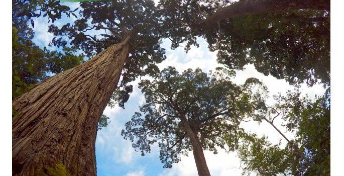 Đánh Giá Quản Trị Rừng ở Việt Nam