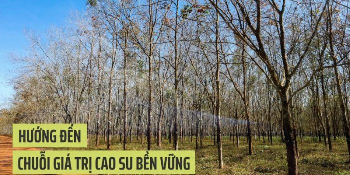 Video: Hướng đến Chuỗi Giá Trị Cao Su Bền Vững