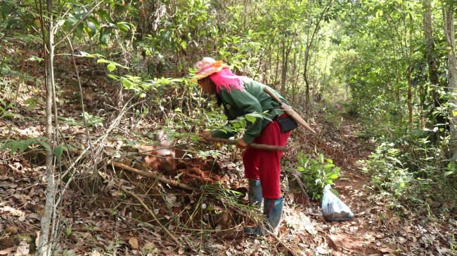 Phục Hồi Rừng Từ Cây Bản địa đa Mục đích Tại Sơn La